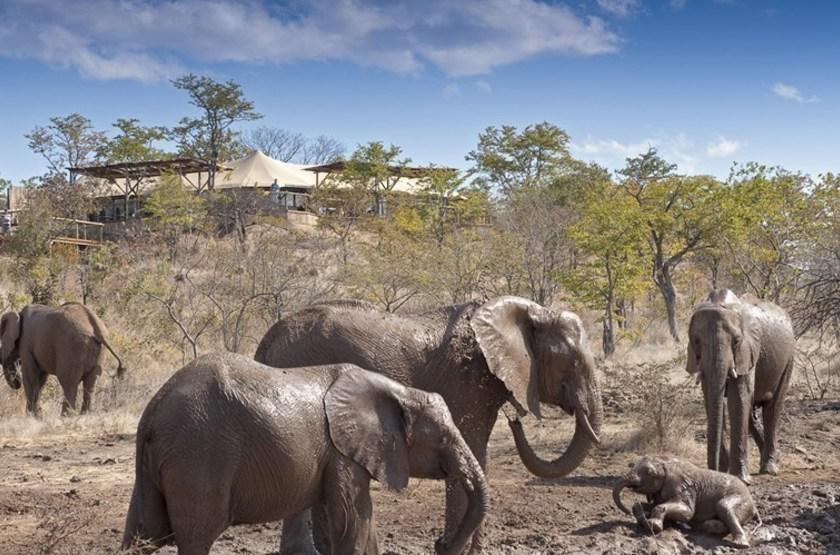 Elephant Camp, Victoria Falls, Zimbabwe, devant le camp