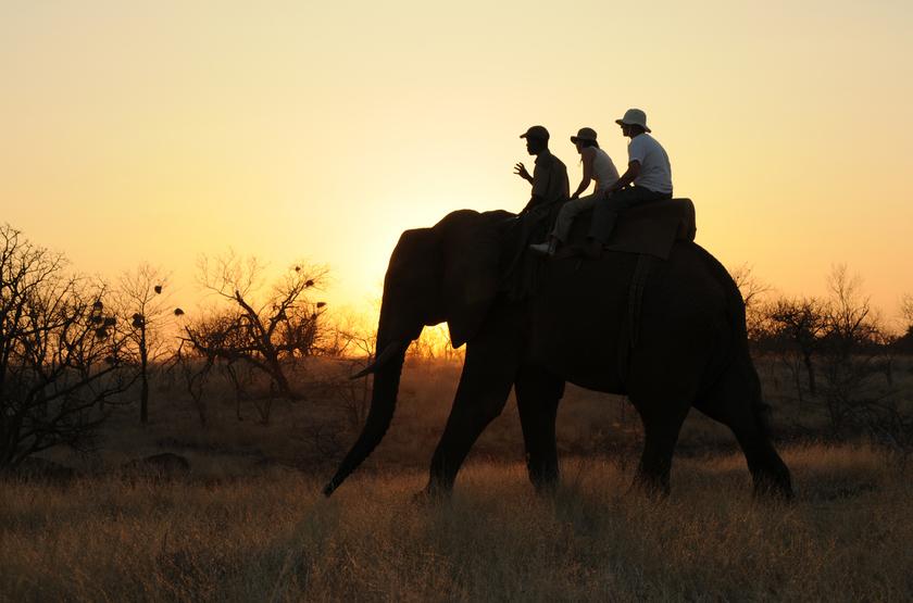 Elephant Camp, Victoria Falls, Zimbabwe, balade à dos d'éléphant