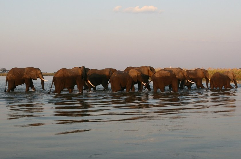 Shoreline Canoeing, Mana Pools, Zimbabwe, safari en canoé
