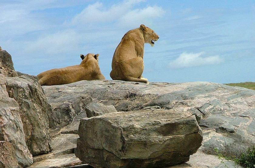 Pioneer Camp Serengeti, Tanzanie, safari dans le parc