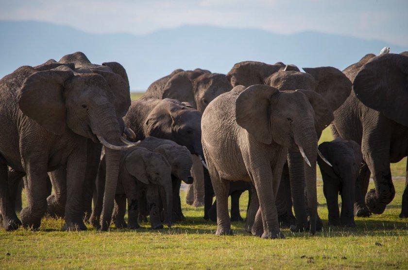 Tawi Lodge, Amboseli, Kenya, safari en 4x4