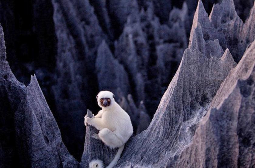 Lemur desn les tsingy de bemahara slideshow