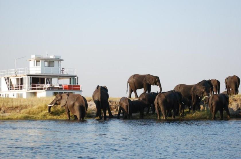Elephants slideshow