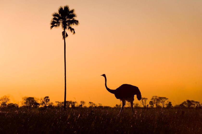 Makalolo Camp, Park Hwange, Zimbabwe, sunset