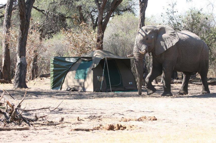 Kazuma Trails, Safari semi luxury, Botswana, invité
