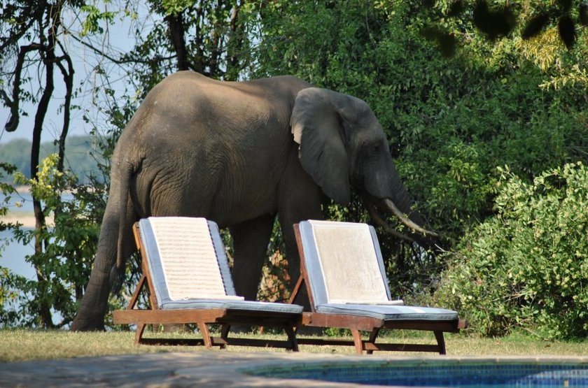 Elephant et piscine slideshow