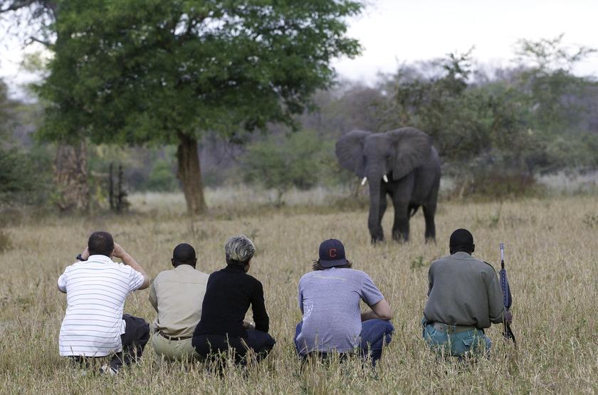 Mvuu Camp, parc de Liwonde, safari à pied