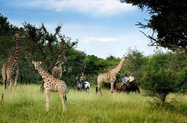 Botswana horse riding listing