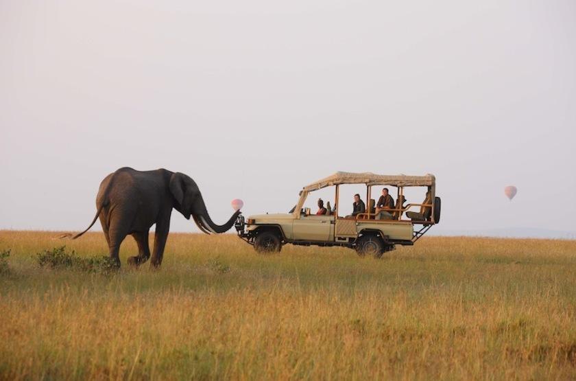 Naibor Camp, Masai Mara, Kenya, safari en 4x4