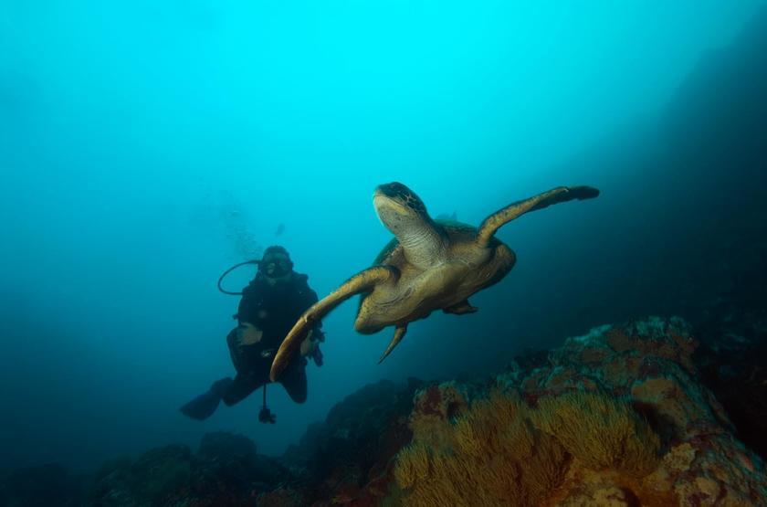 Catamaran Ocean Spray, Galapagos, Equateur, tortues