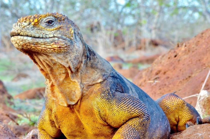 Iguane slideshow