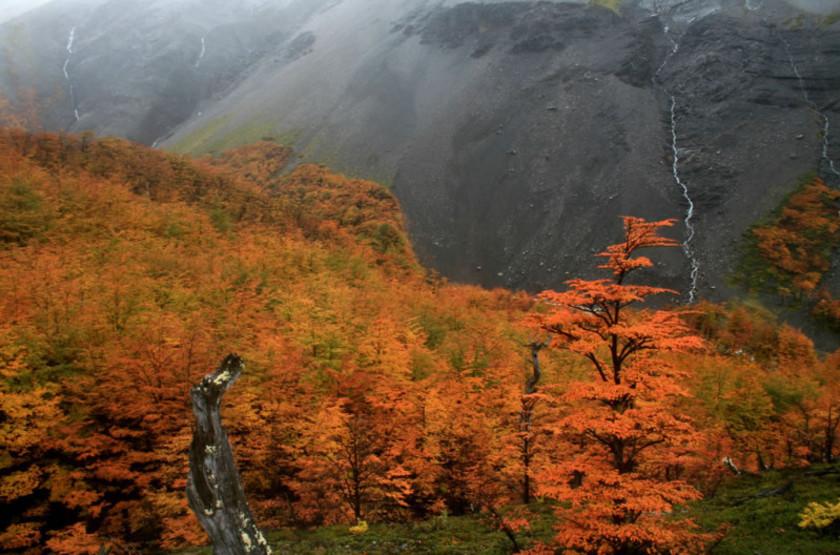Autumn trees 800x533 slideshow