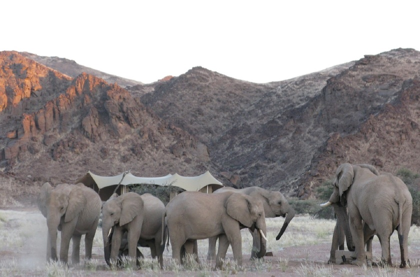Hoanib Skeleton Coast Camp, Namibie, éléphants devant le camp