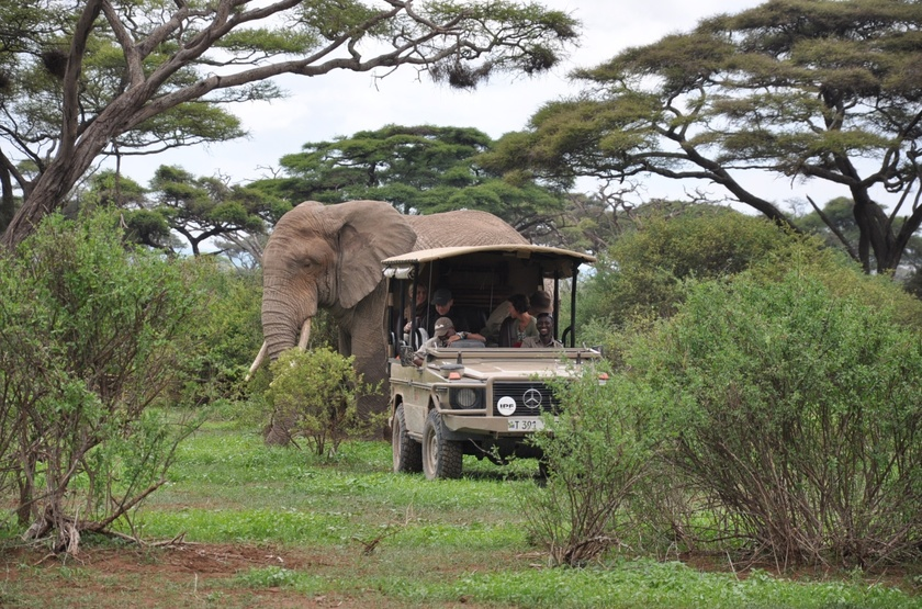 Shu'Mata, South Amboseli, Tanzanie, safari en 4x4