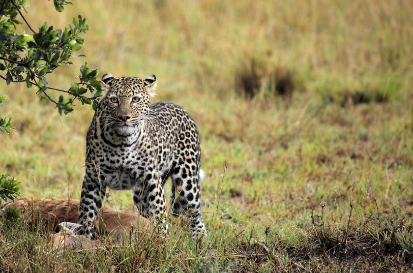 Namiri Plains, Serengeti, Tanzanie, safari en 4x4