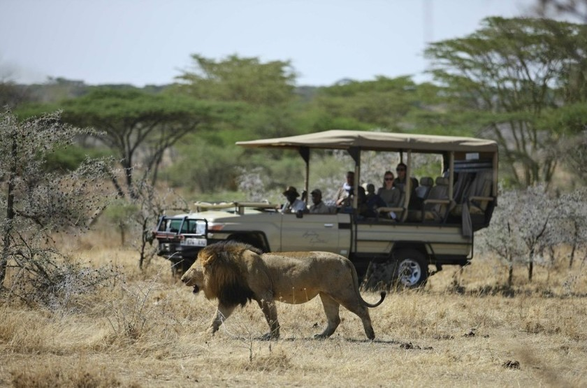 Mwiba Lodge, Réserve privée Serengeti, Tanzanie, safari en 4x4