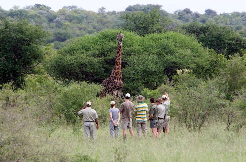 Kapama Karula, Afrique du Sud, safari à pied