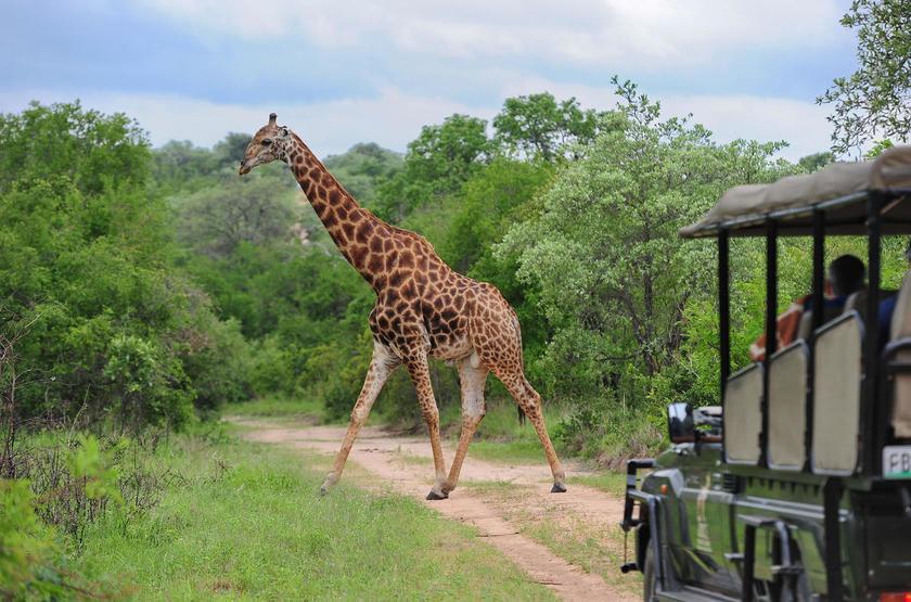 Jock Safari Lodge, Réserve privée Kruger, Afrique du Sud, safari en 4x4