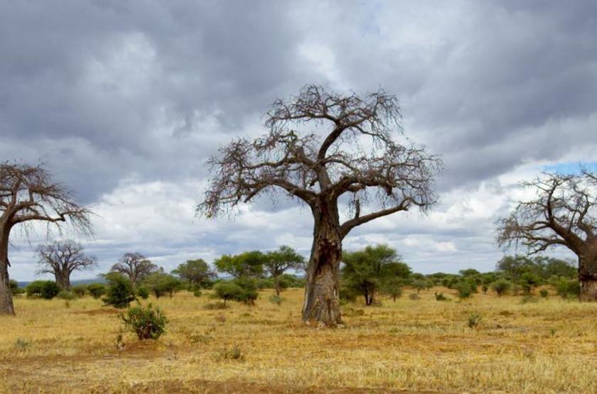 Oliver's Camp, Parc de Tarangire, Tanzanie
