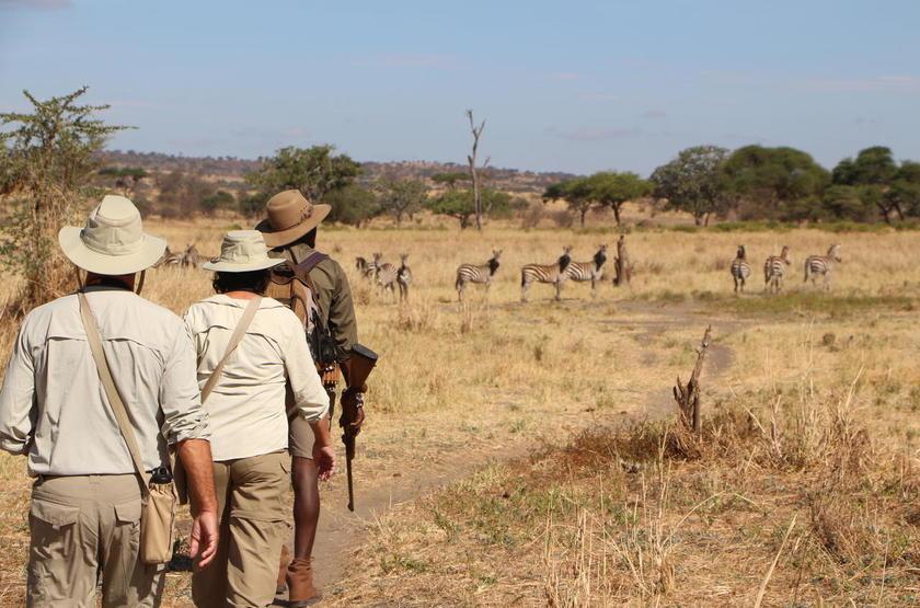 Oliver's Camp, Tarangire, Tanzanie, safari à pied