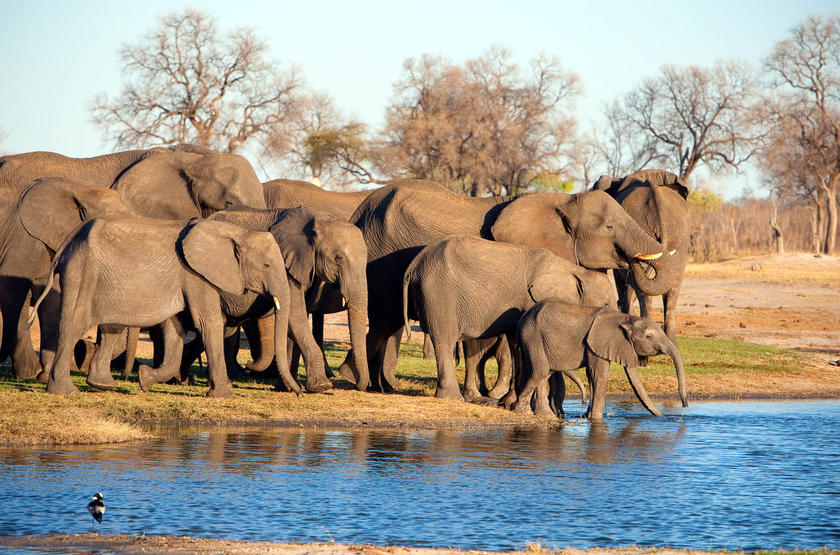 Elephant 2 slideshow