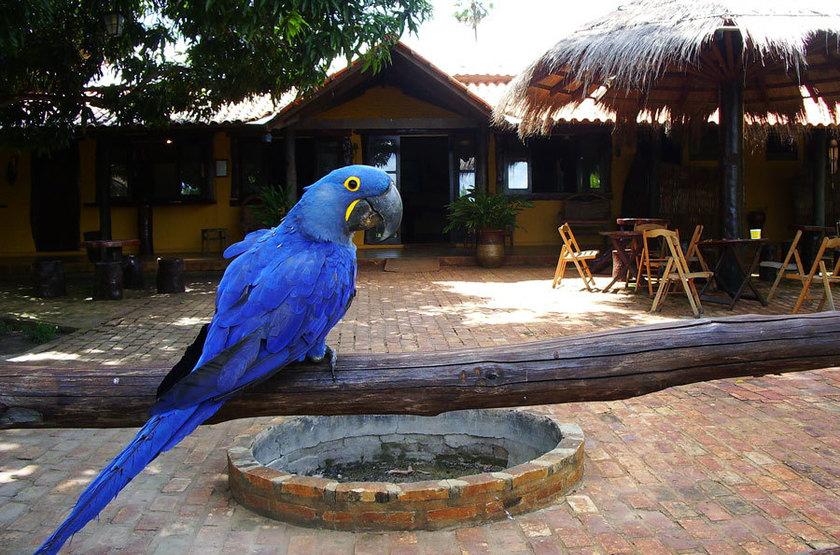 Araras Eco Lodge, Pantanal nord, Brésil