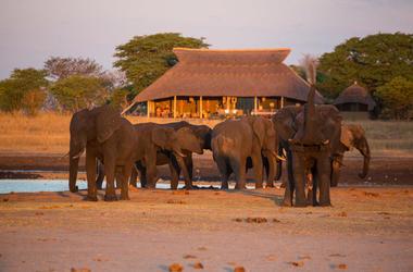 Zimbabwe camphwange elephants listing
