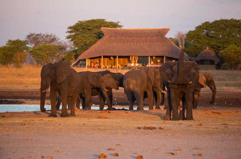 Les éléphants sont chez eux à Camp Hwange, Zimbabwe