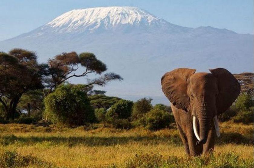 Elewana Tortilis Camp, Amboseli, Kenya, safari en 4x4 vue Kilimandjaro