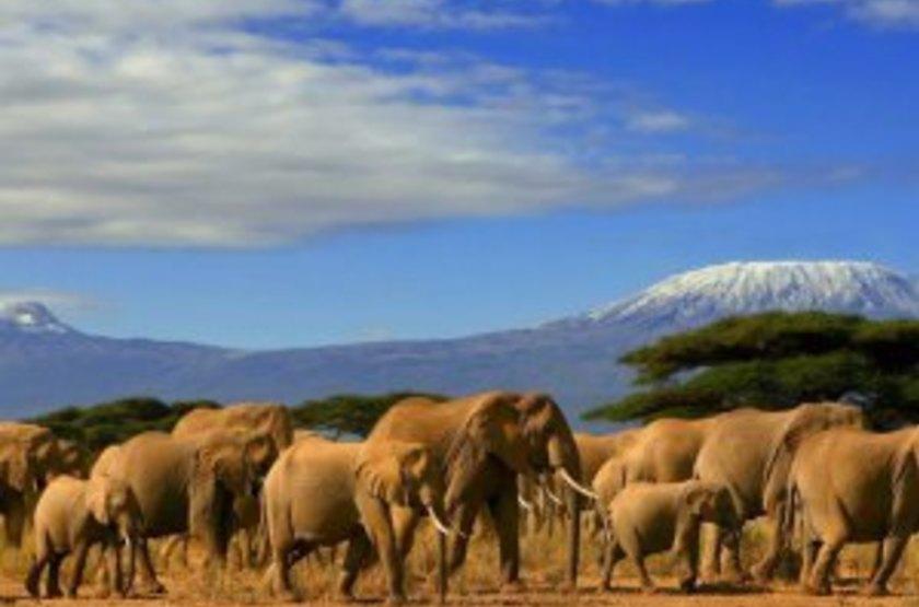 Kilima Safari Camp, Amboseli, Kenya, safari en 4x4