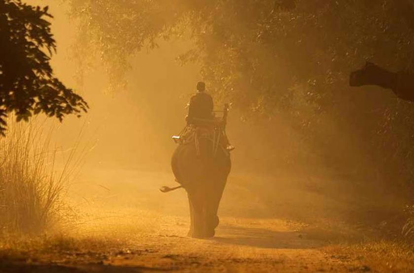 Taj Baghvan Wildlife Resort, Parc de Pench, Inde, safari