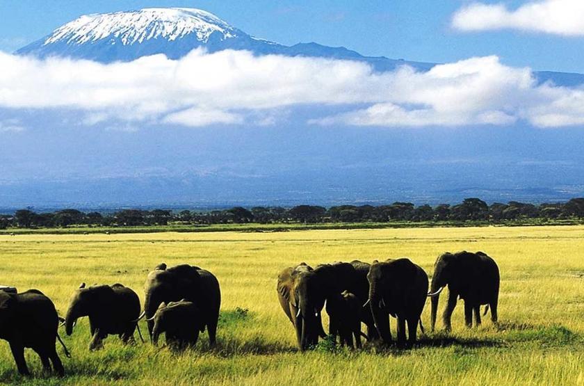 Elewana Tortilis Camp, Amboseli, Kenya, safari en 4x4