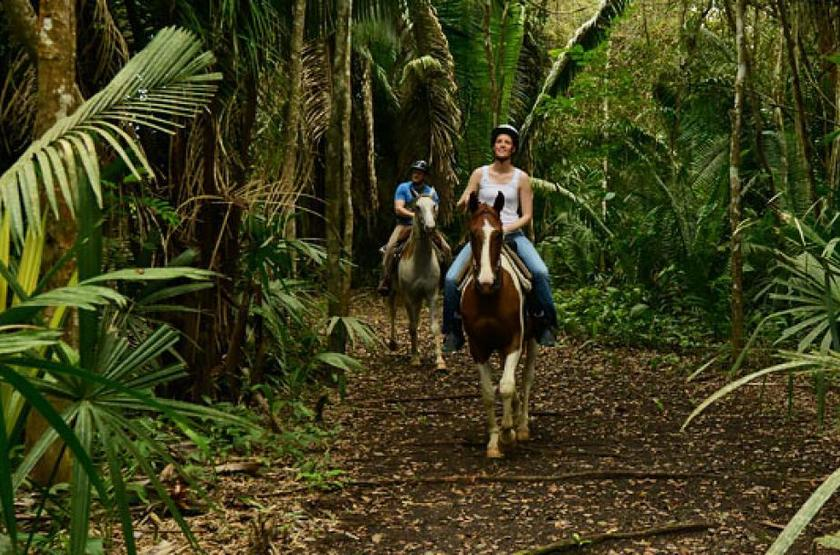 Chaa Creek Lodge, San Ignacio, Belize, balade en forêt