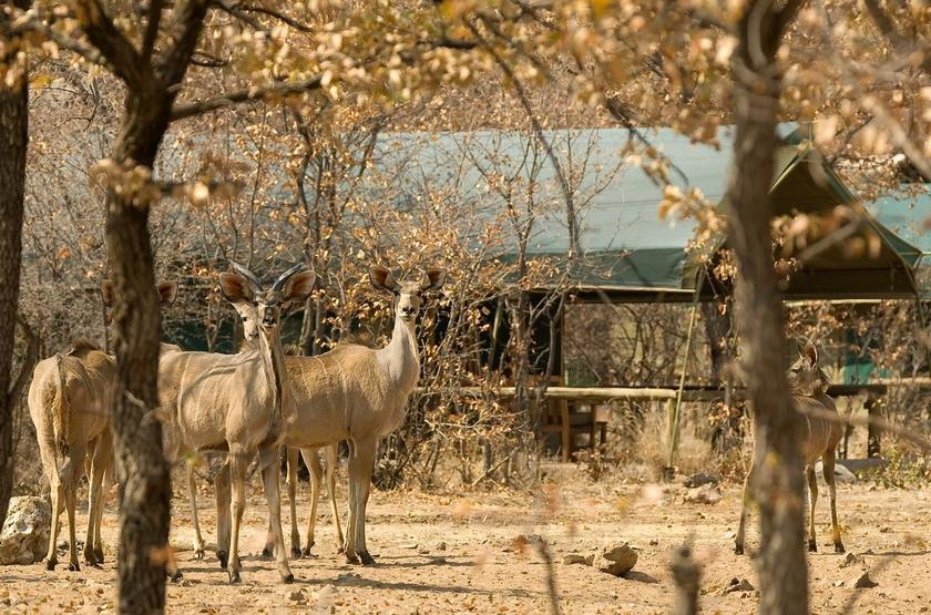 Ongava tented camp, Namibie
