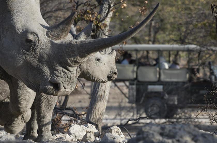Ongava Lodge, Territoire d'Ongava, Namibie, safari en 4x4
