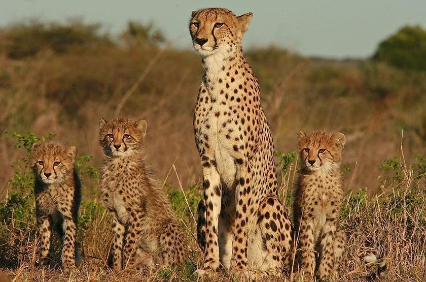 &Beyond Kichwa Tembo, Masai Mara, Kenya, safari