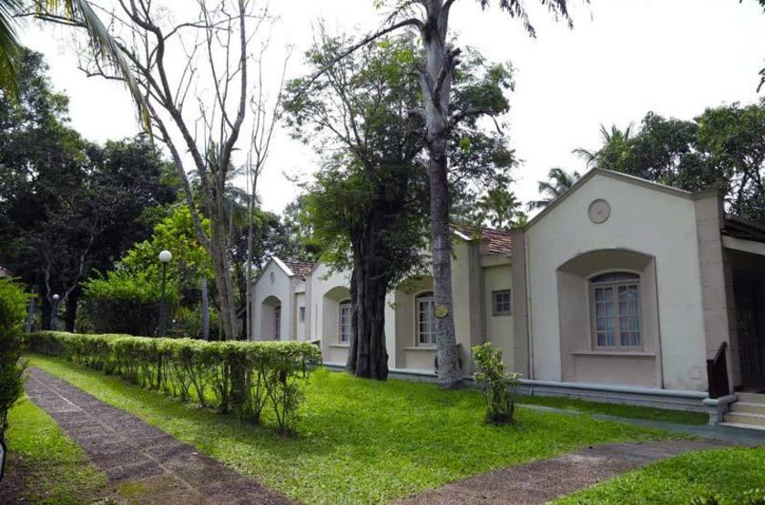 Sri Lanka - Tamarind tree - Exterieur