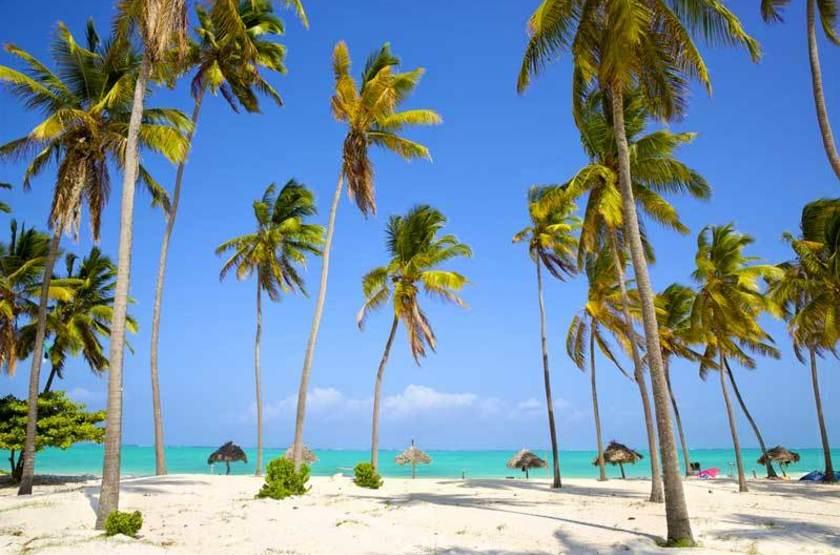 Plage et palmiers à Zanzibar