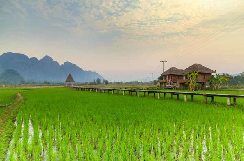 Rizières Laotienne