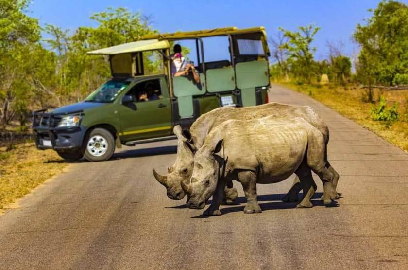 Rhinocéros blanc, Parc National Kruger, Afrique du Sud