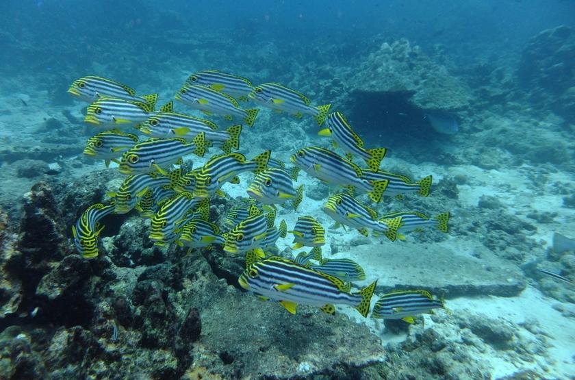 Plongée dans les Iles Andaman, Inde