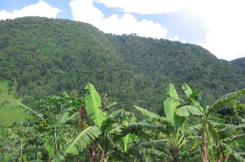 Forêt Impenetrable de Bwindi, Ouganda