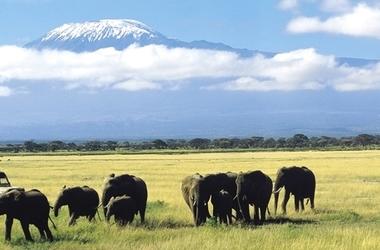 Du Kilimanjaro aux plages de Mombasa, voyage Afrique