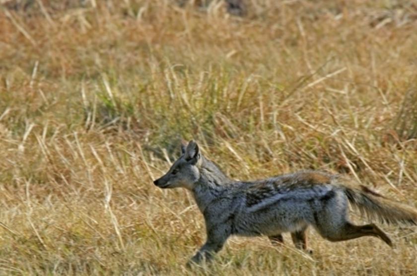 Safari à Kasanga, Zambie