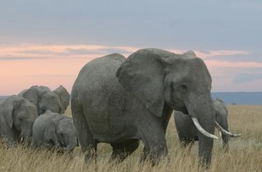 Le Kenya en avion taxi : Amboseli, Samburu, Masaï Mara, voyage Afrique