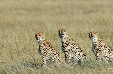 Safari Kenya en groupe de 6 personnes, voyage Afrique