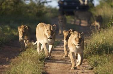 Echappée belle en Afrique du Sud, voyage Afrique