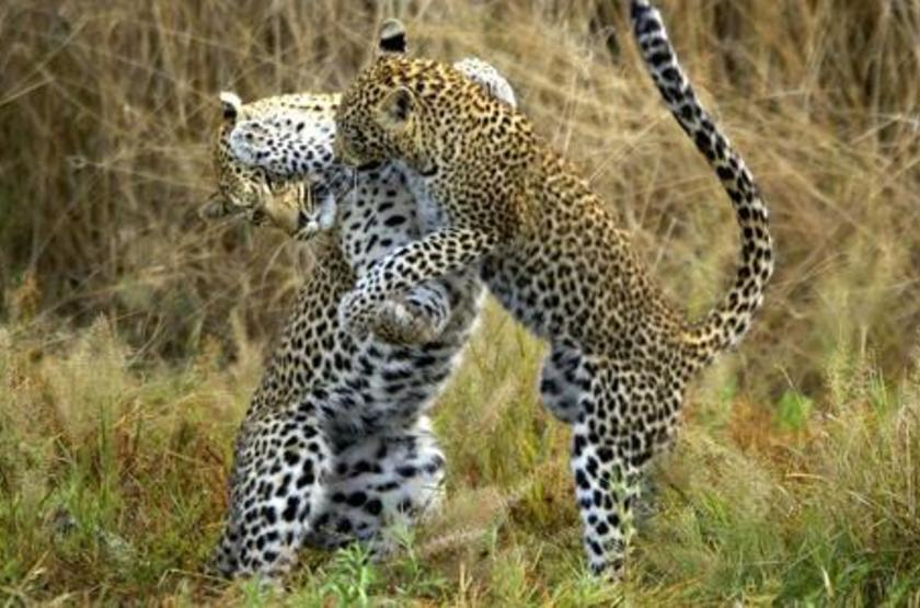 Safari en  Afrique du Sud, réserve privée