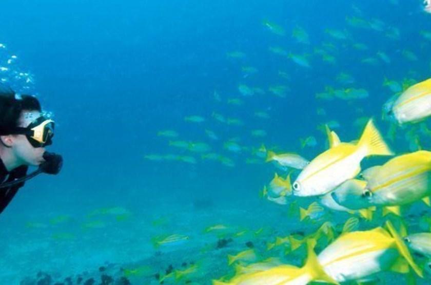 Plongée à Denis Island, Seychelles