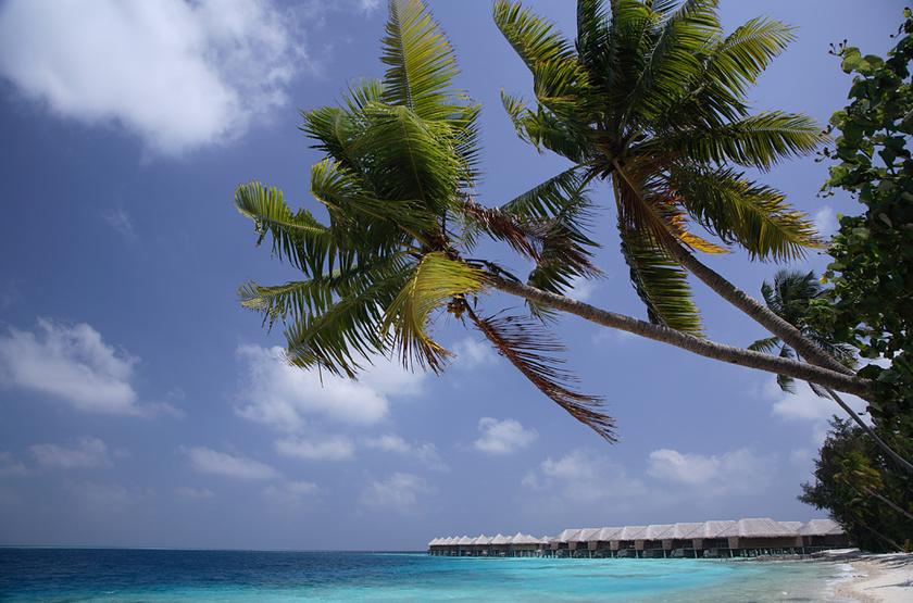 Coco palm bodu hithi   bungalows slideshow